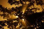 light_leaves.jpg