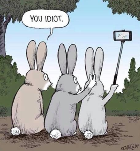 Rabbit selfies.jpg