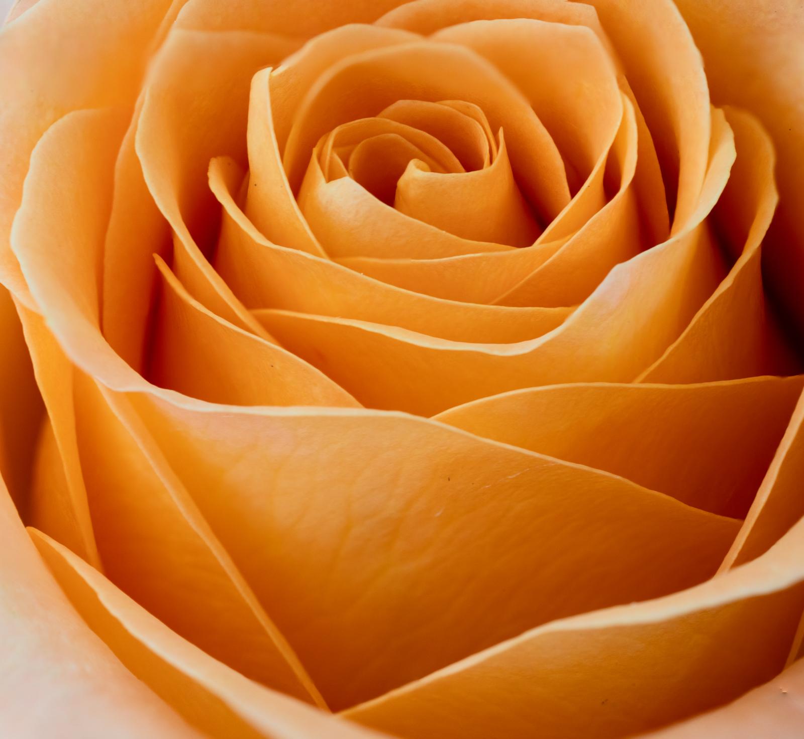 Rose 9 stack.jpg