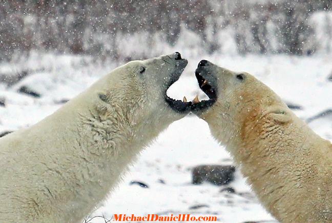 polarbear74.jpg