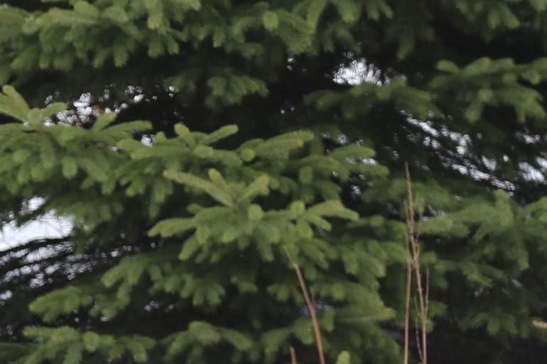 treetestcropped.jpg