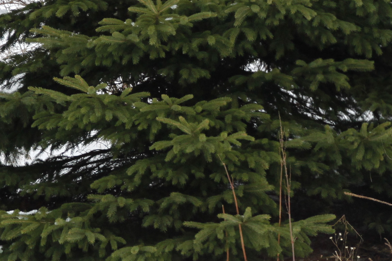 treetest2cropped.jpg