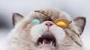 Cat33ona